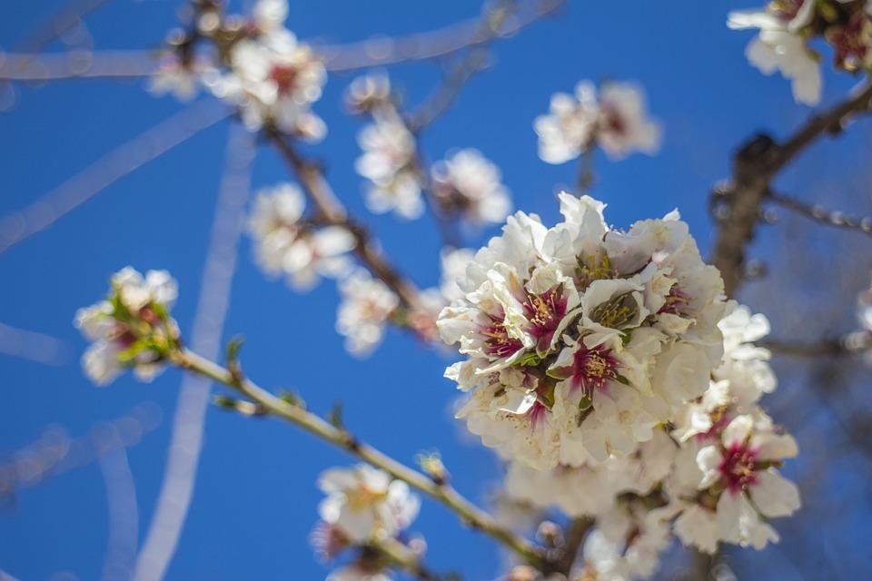 Flower, Spring, Cherry Blossom, Bloom, Blossom