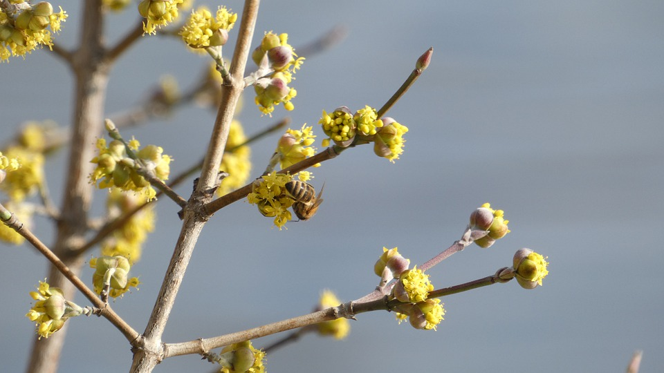 Bud, Bee, Nature, Blossom, Bloom, Flower, Plant, Spring