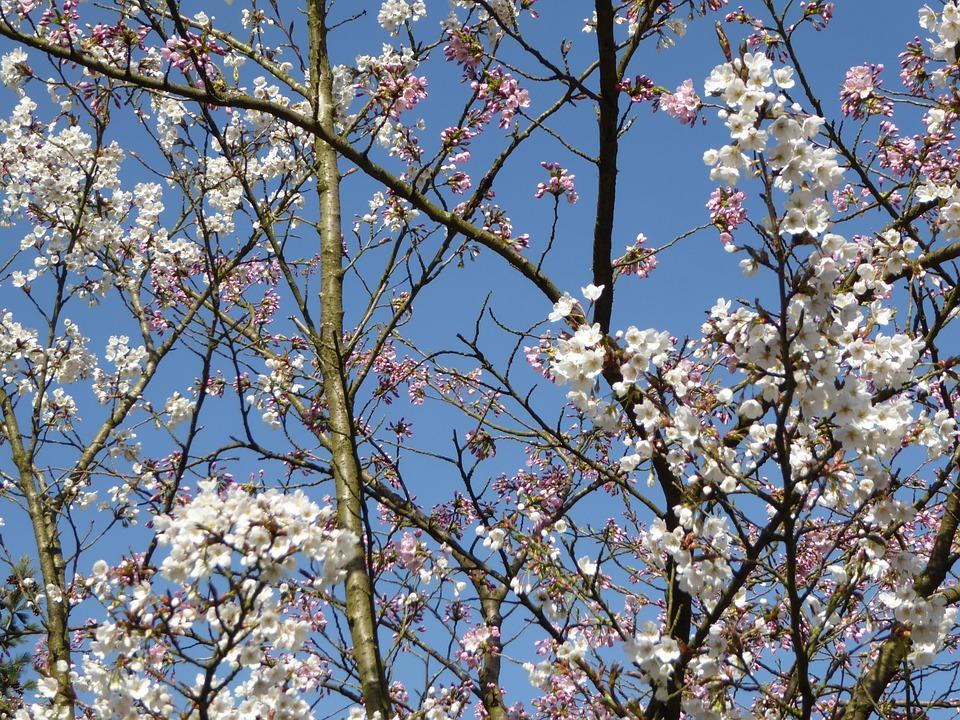 Spring, Blossom, Sky