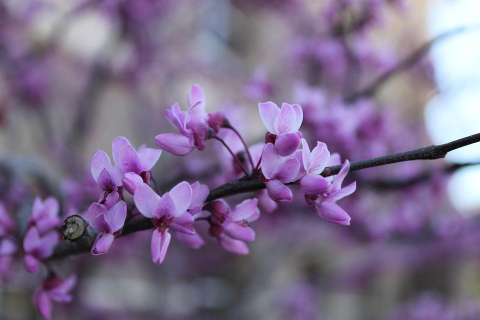 Bloom, Spring, Blossom, Springtime, Blooming, Outdoor