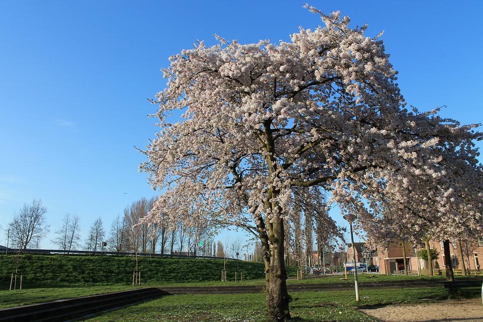 Flower, Daisy, Blossom, Blooming, Plant, Spring, Summer