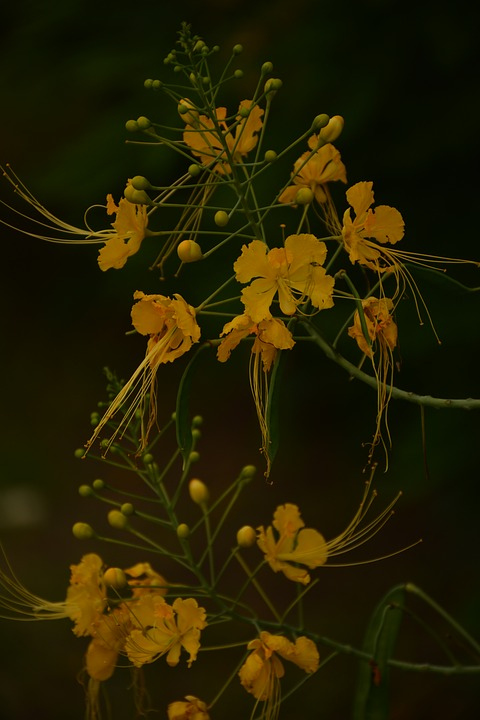 Nature, Flower, Blossom, Plant, Spring, Bloom, Summer