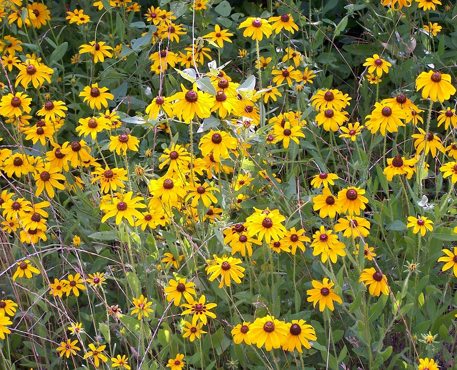 Flowers, Yellow, Sunflowers, Floral, Blossom, Plant