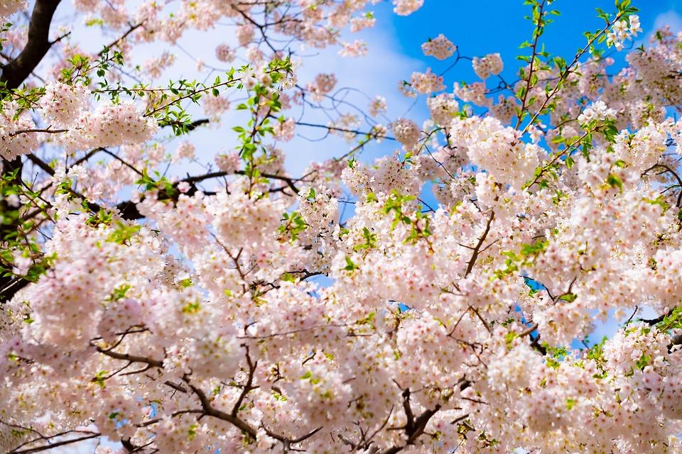 Blossom, Tree, Pink, Spring, Nature, April, Flower