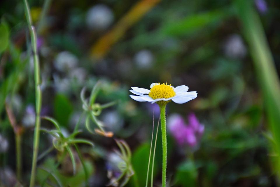 Flower, Bloom, Plant, White Flower, Blossom