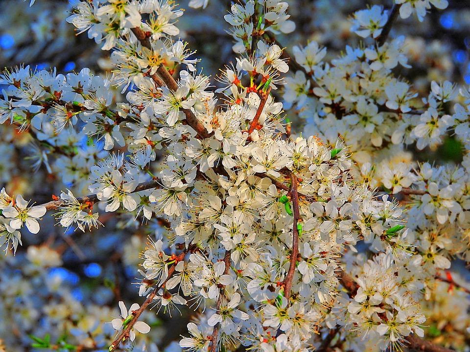 Wild Flowers, White Flowers, Close, Blossom, Bloom