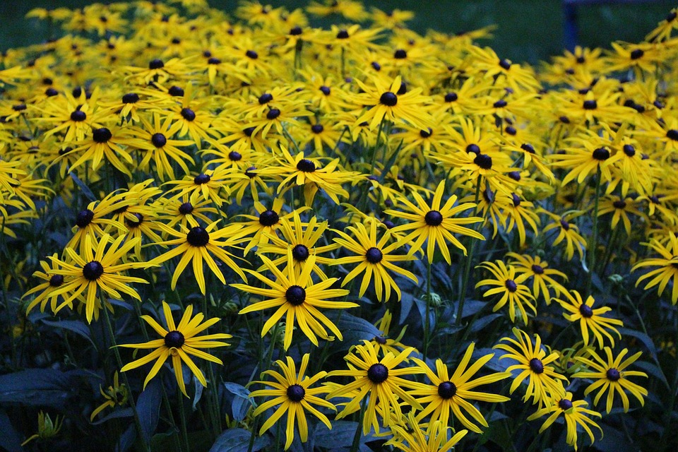 Flowers, Yellow, Spring, Yellow Flower, Plant, Blossom