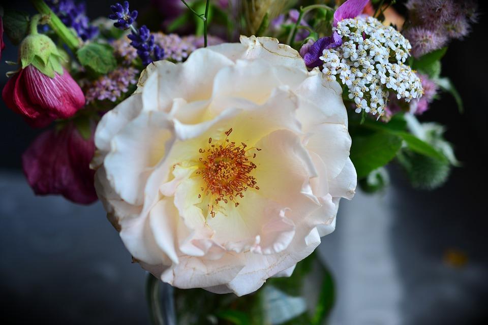 Rose, Blossomed, Pistil, Blossom, Bloom, Rose Bloom