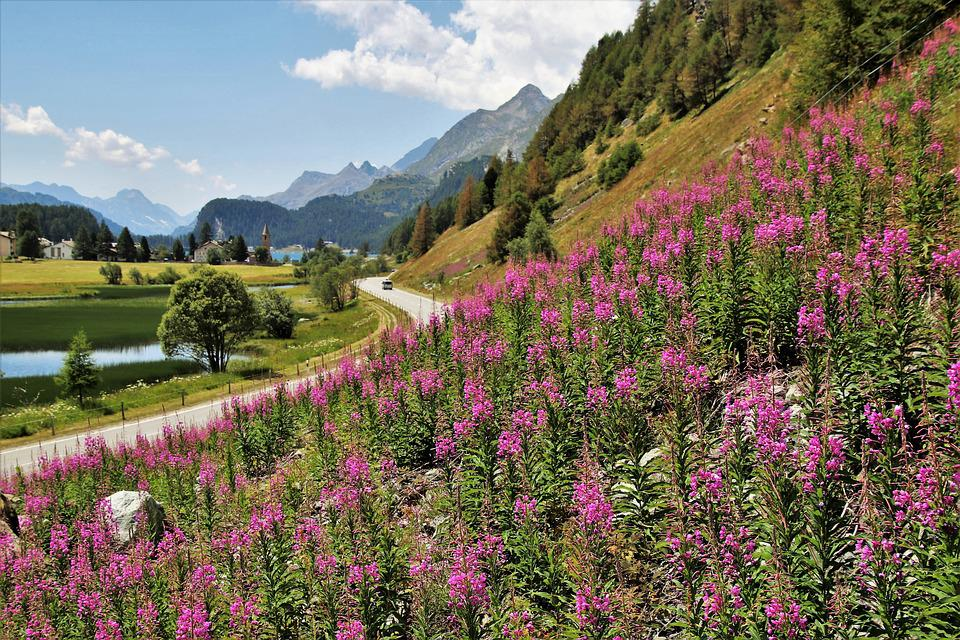 The Alps, Panorama, Meadows, Landscape, Blossomed