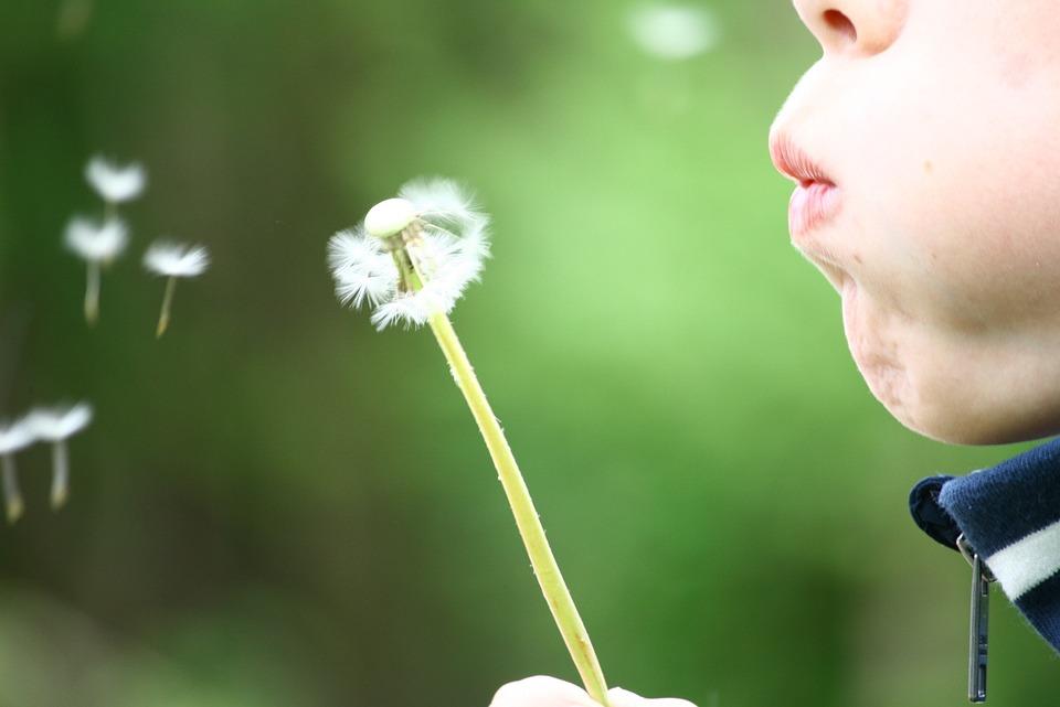 Dandelion, Blowing, Childhood, Kid, Summer