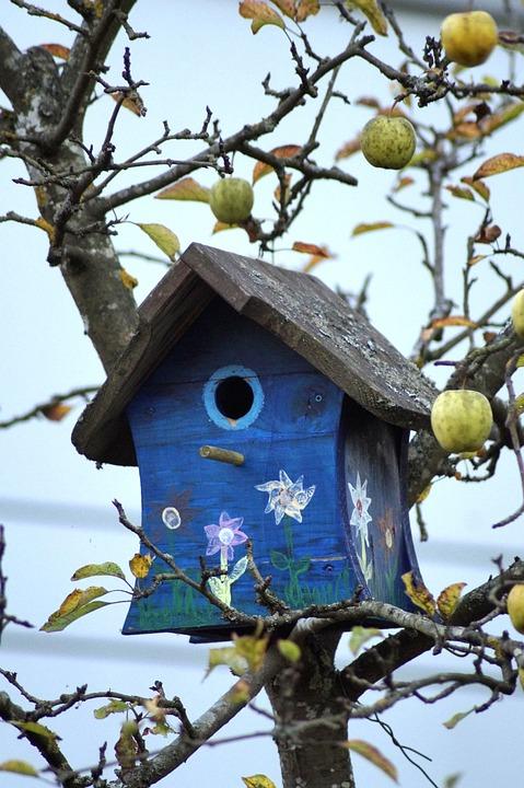 Bird Feeder, Aviary, Wood, Nature, Blue, Tree, Apple