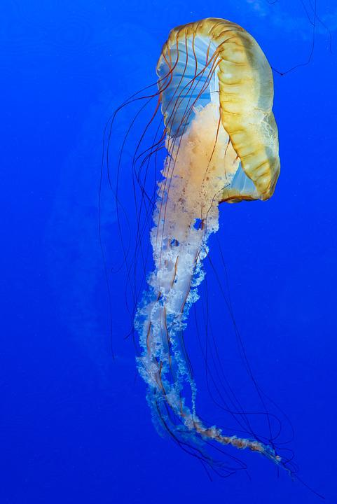 Blue, Aquarium, Jelly, Fish, Tentacles