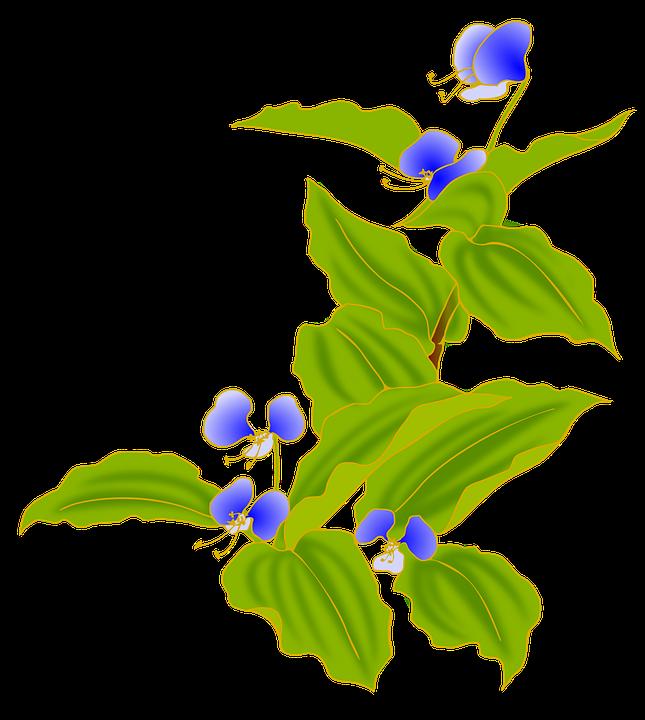 Dayflower, Autumn, Blue, Flowers