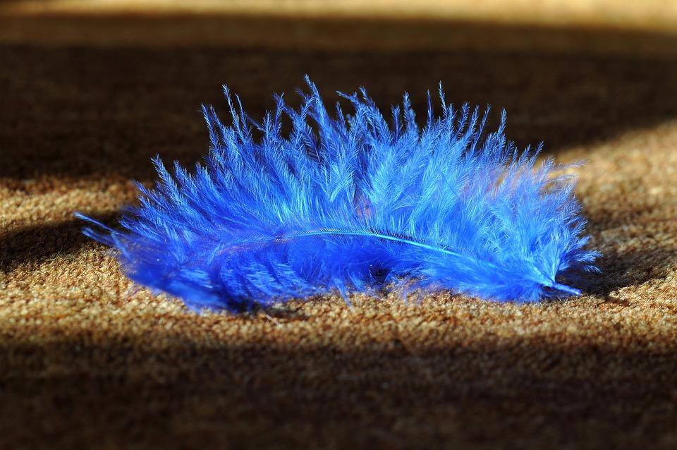 Spring, Blue, Animal Springs, Bird Feather, Airy