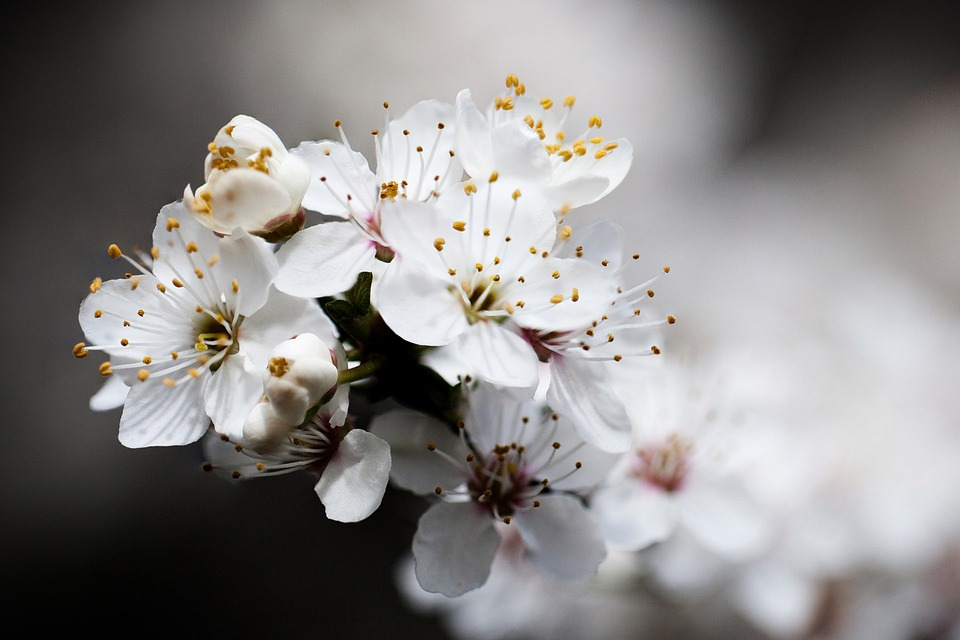 Beautiful, Bloom, Blooming, Blossom, Blue, Branch