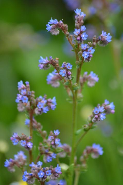 Small Flowers Purple Blue Flower Blossom