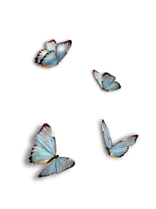 Butterflies, Blue, Insect, Isolated
