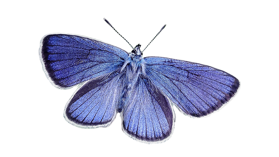 Butterfly, Blue, Nature, Blue Wing