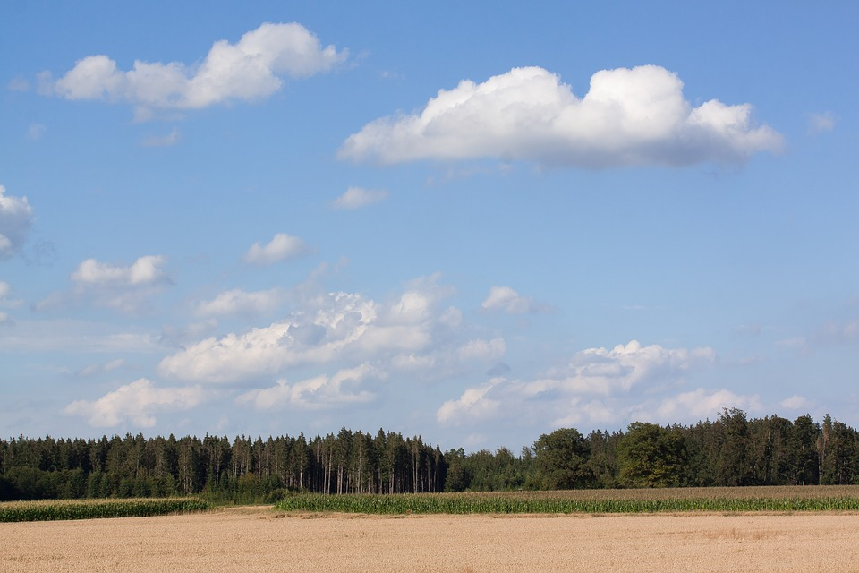 Sky, Clouds, Blue, White, Cereals, Staple Food, Grain