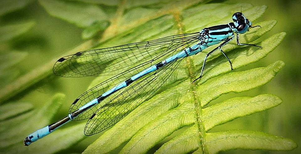 Dragonfly, Blue, Insect, Blue Dragonfly, Close, Nature