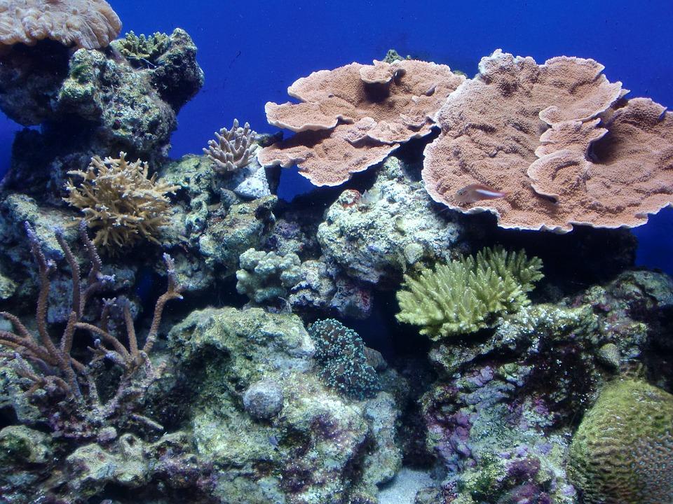 Coral, Sea, Blue, Underwater, In The Sea