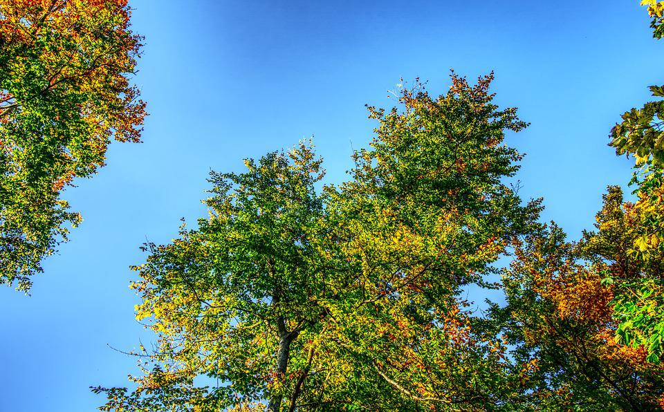 Crown, Leaves, Green, Colorful, Autumn, Sky, Blue