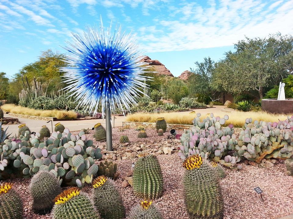 Desert, Botanical, Gardens, Cacti, Dry, Blue