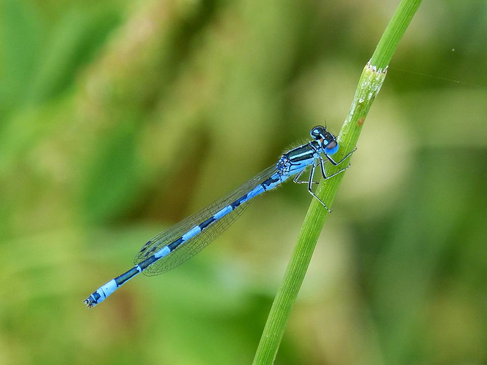Dragonfly, Blue Dragonfly, Flying Insect, Beauty