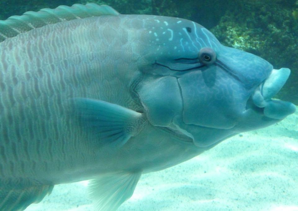 Blue, Fish, Nature