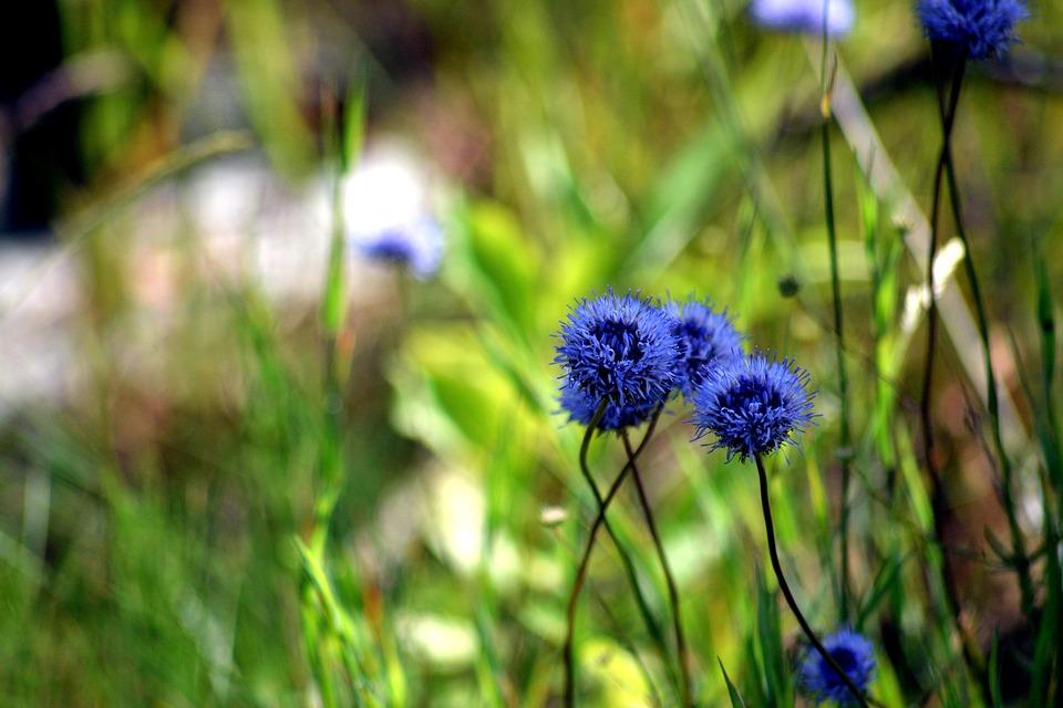 Blue Flower, Macro, Nature, Plants, Flowers, Beauty
