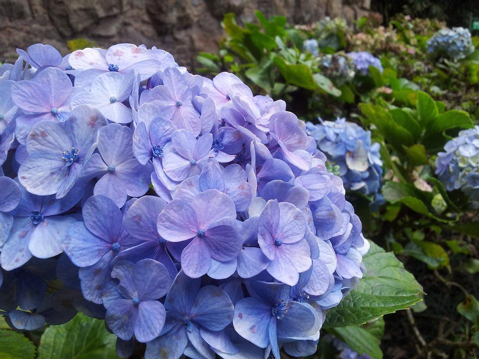Flower, Blue, Nature, Flowers, Plant, Delicate
