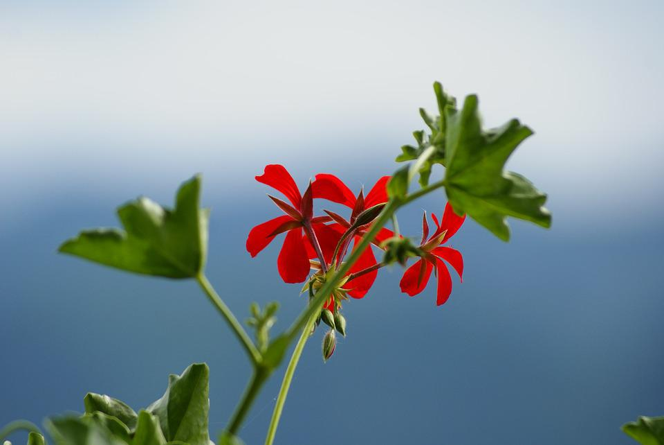 Blue, Red Flower, Flower, Nature, Sky, Blue Sky, Macro