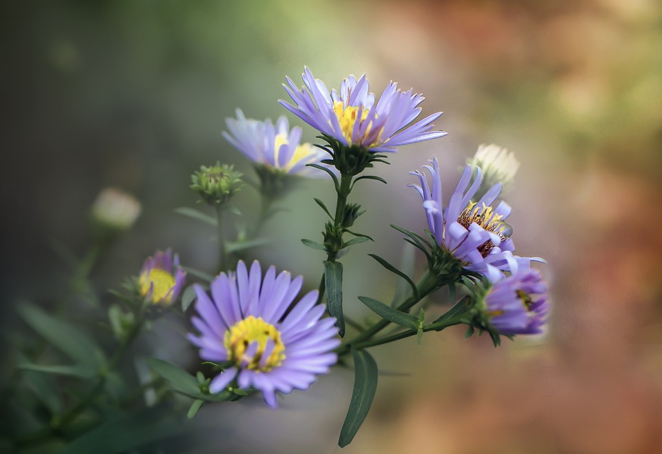 Flower, Flowers, Nature, Spring, Summer, Colorful, Blue