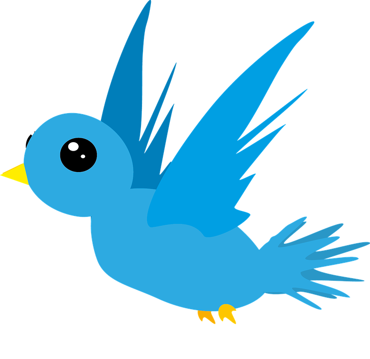 Bird, Animal, Blue, Fly