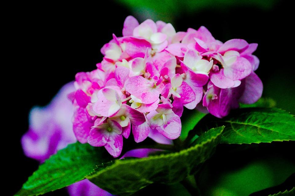 Flower, Green, Garden, Blue, Summer, Gardening, Lawn