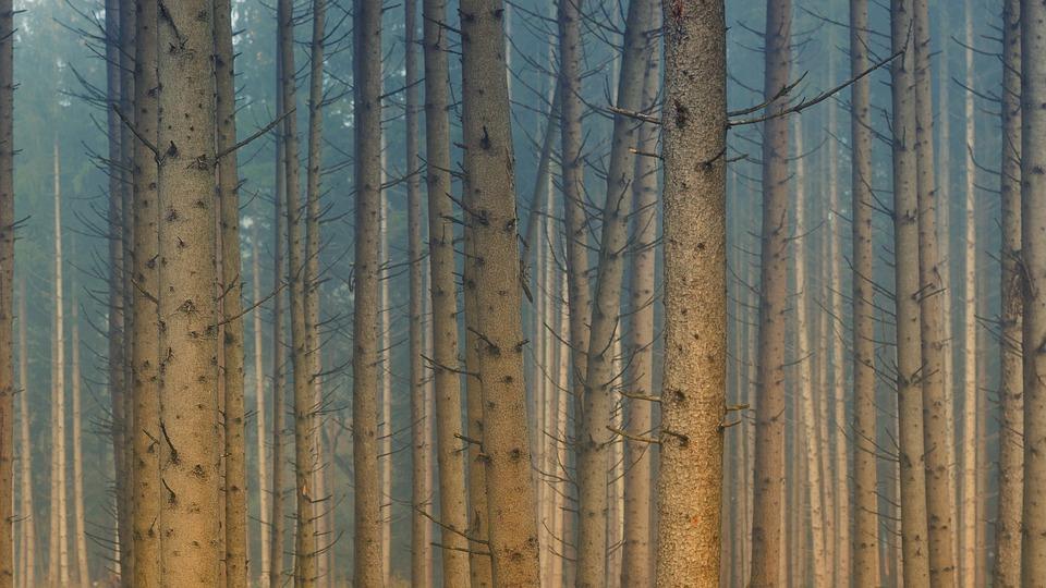 Forest, Trees, Fog, Haze, Blue, Light, Landscape