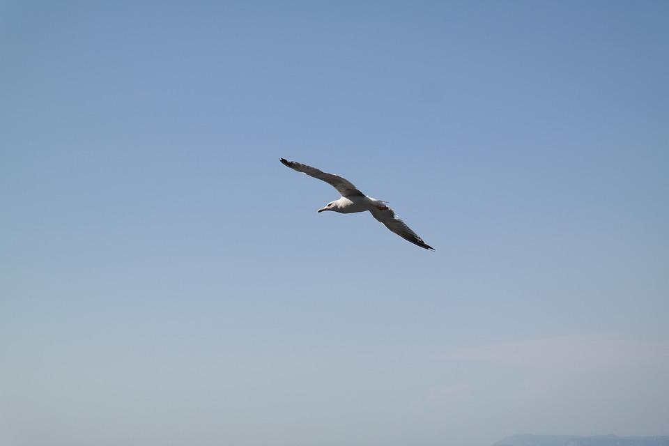 The Seagull, Heaven, Blue