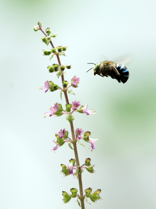 Bee, Blue, Small, Nature, Green, Insect, Flower, Honey