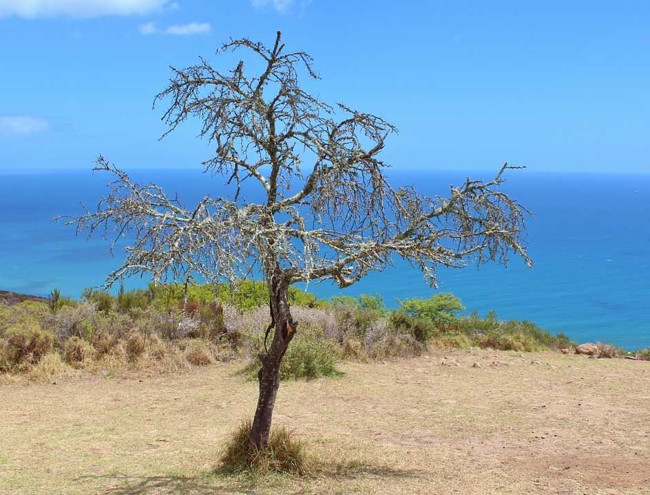 Tree, Kahl, Sky, Aesthetic, Coast, Sea, Blue