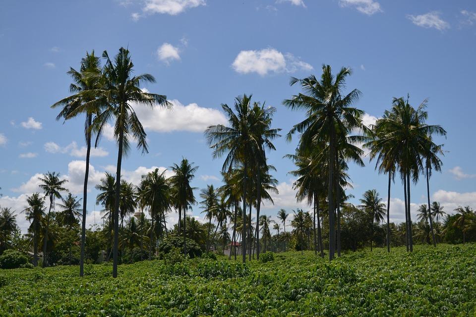 Palm Trees, Blue Sky, Holiday, Landscape, Blue, Air