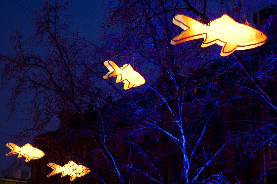 Lamps, Lighting, Fish, Night, Orange, Blue, Light