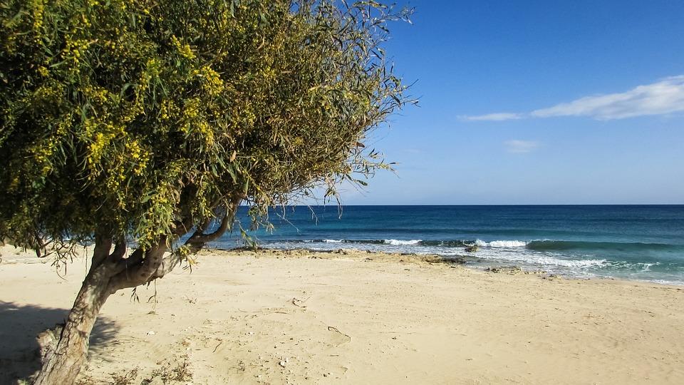 Cyprus, Ayia Napa, Makronissos Beach, Tree, Sky, Blue