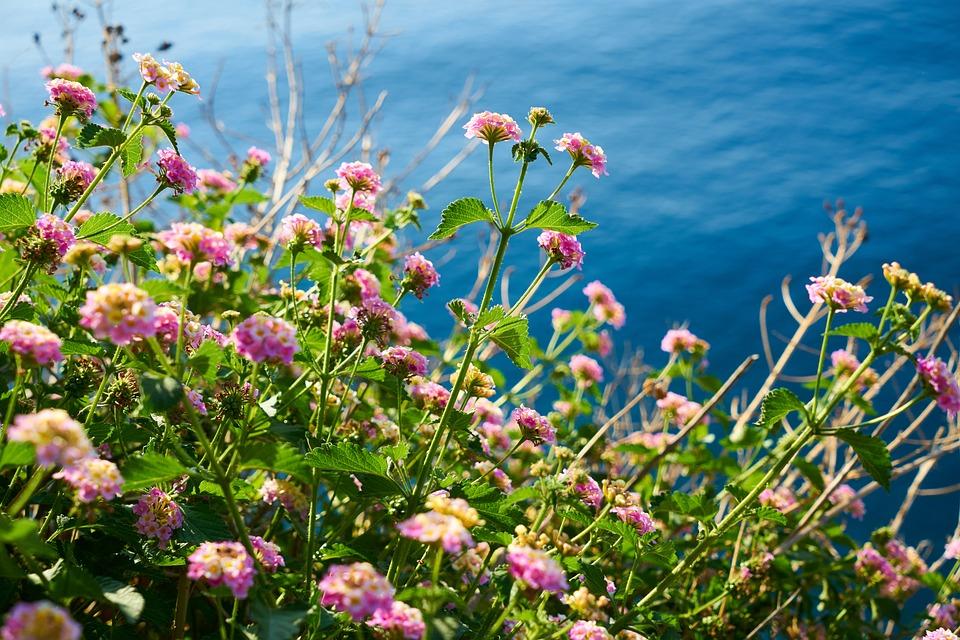 Flowers, Marine, Blue, Landscape, Nature, Color, Spring