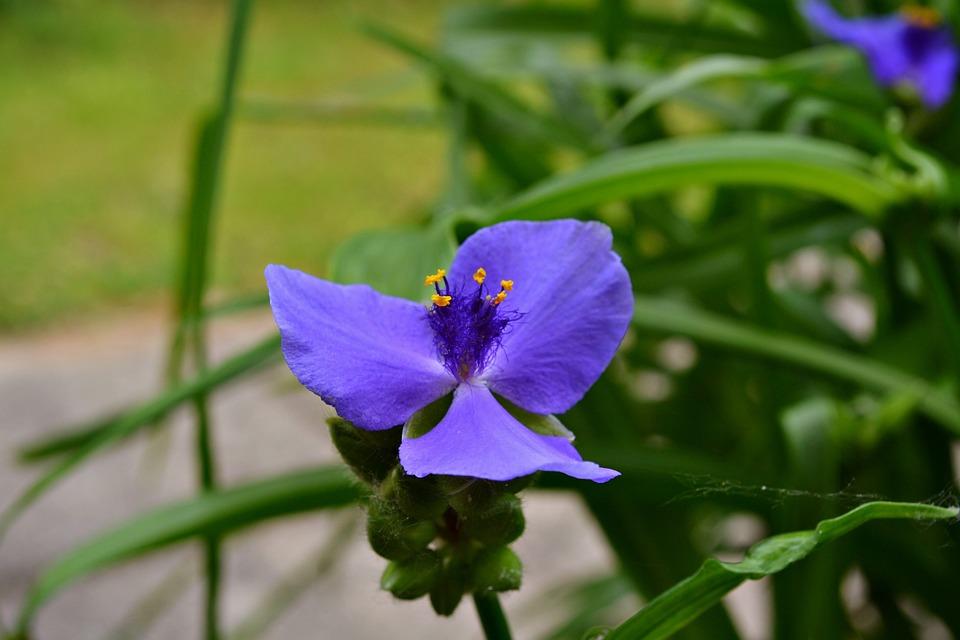 Flower, Blue, Nature, Purple, Goren