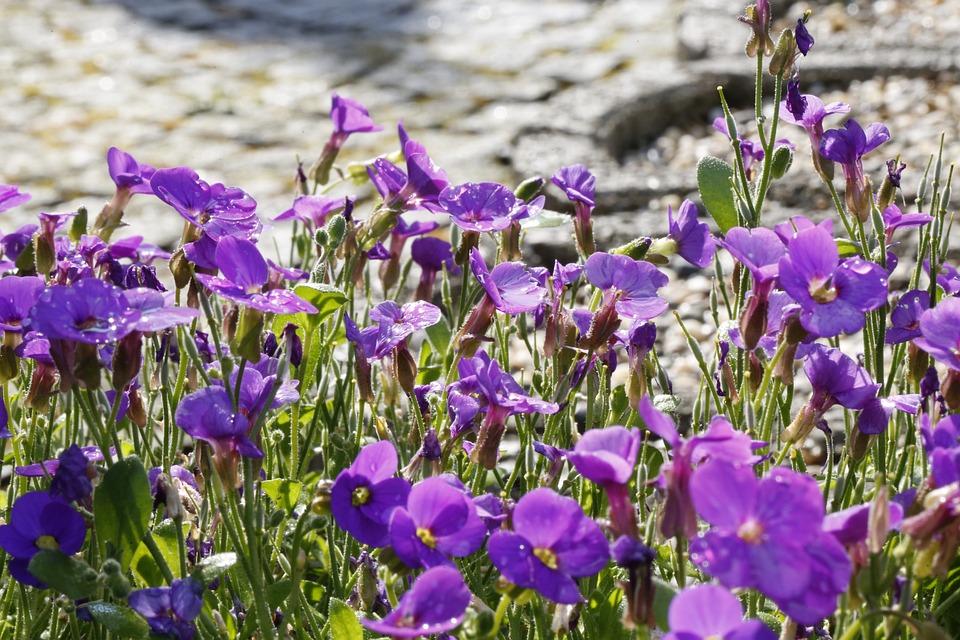 Flowers, Garden, Spring, Nature, Summer, Blue, Plant