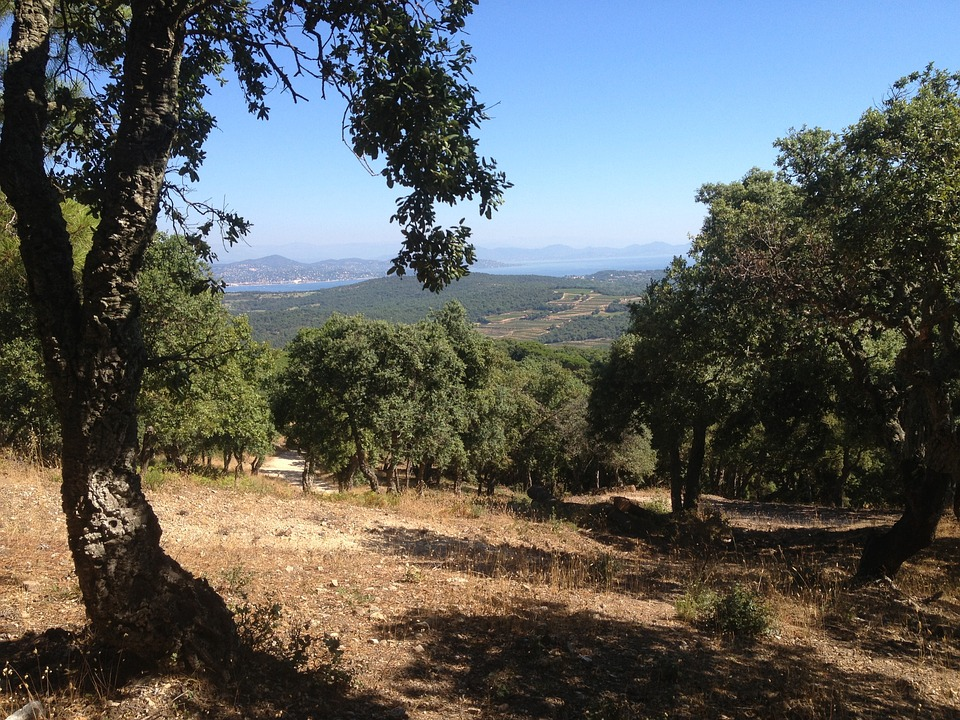 View, Mountain, Cork Oak, Blue, Nature, France