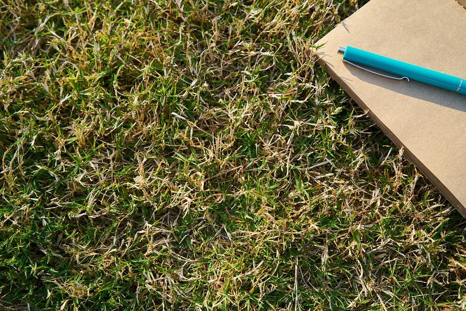 Grass, Notebook, Pen, Blue, Green, Paper, Page