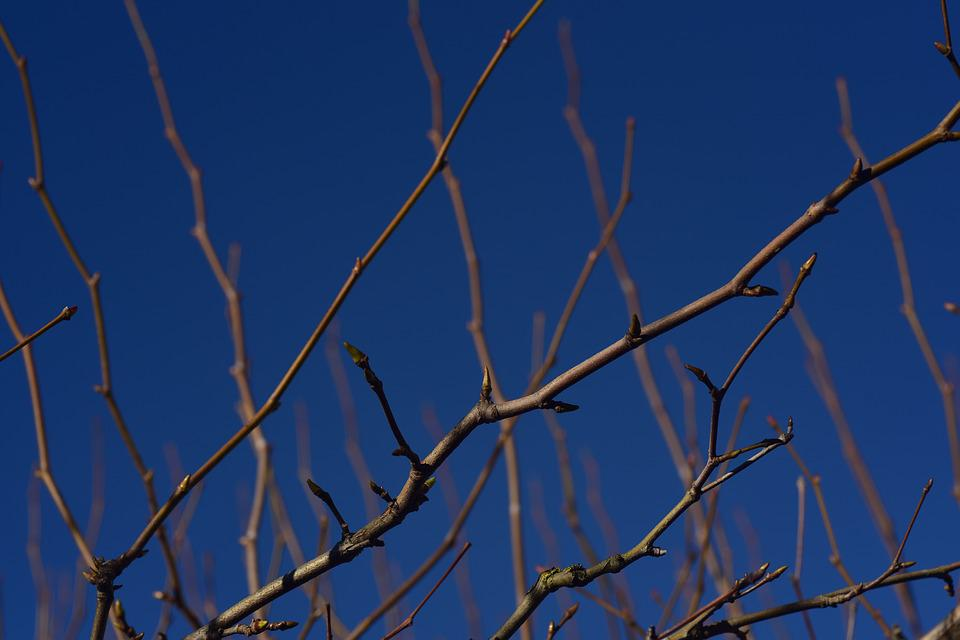 Branches, Kahl, Pasture, Sky, Blue, Close Up, Tree