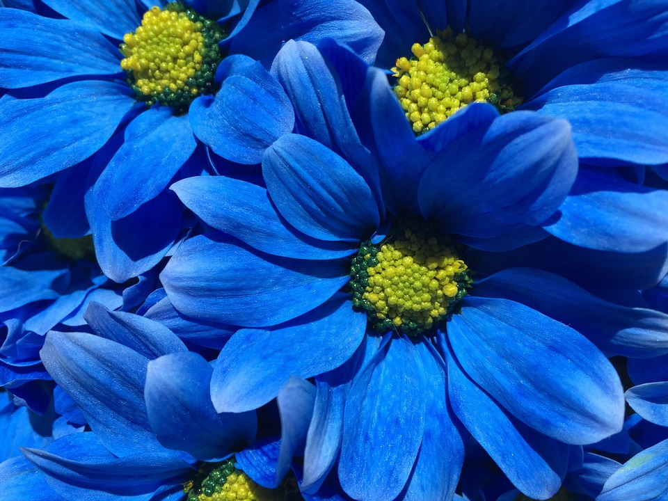 Flower, Blue, Petals, Background, Nature, Plant