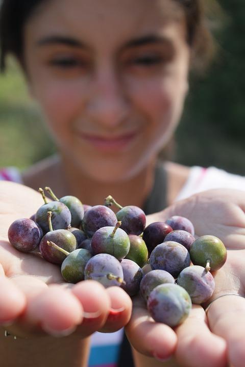 Berries, Blackthorn, Blue, Blueberries, Girl, Prunus